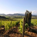 Koyle Biodynamic Wines Receive Top Ratings