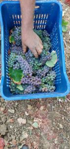 Domaine Gioulis Organic Harvest 2019 2