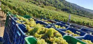 Domaine Gioulis Organic Harvest 2019