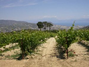 Organic Winery Update Domaine Gioulis