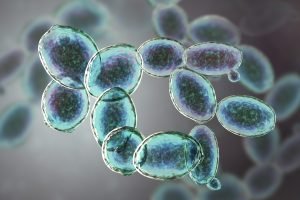3D Yeast Cells